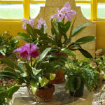 Repotting & Mounting plus Combating Pests & Diseases