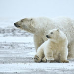 The Arctic: Our Last Great Wilderness Weekend